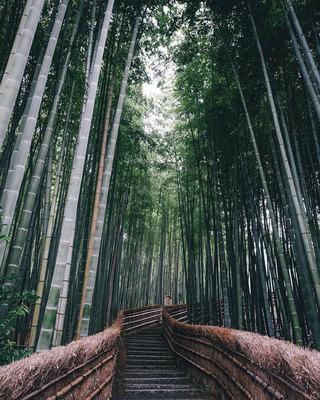 151130_Japan.jpg